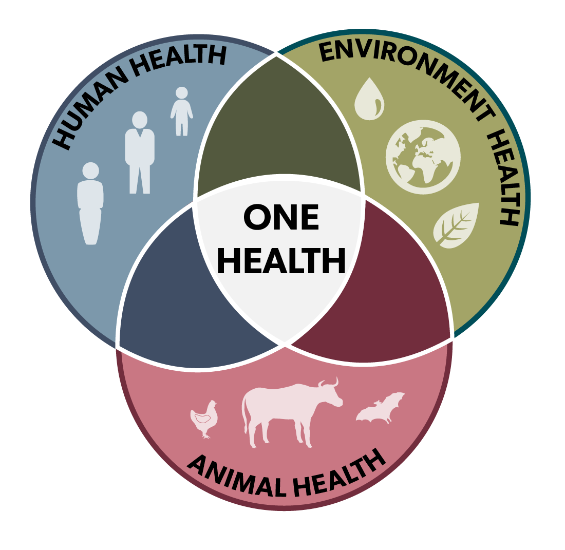 One health infographic representing the intersection between human, animal and environment health